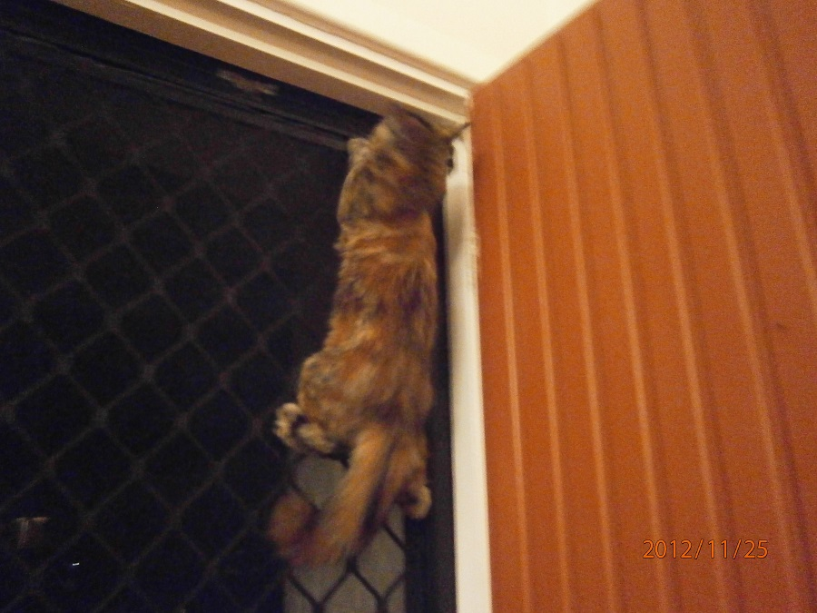 cute funny kitten pictures