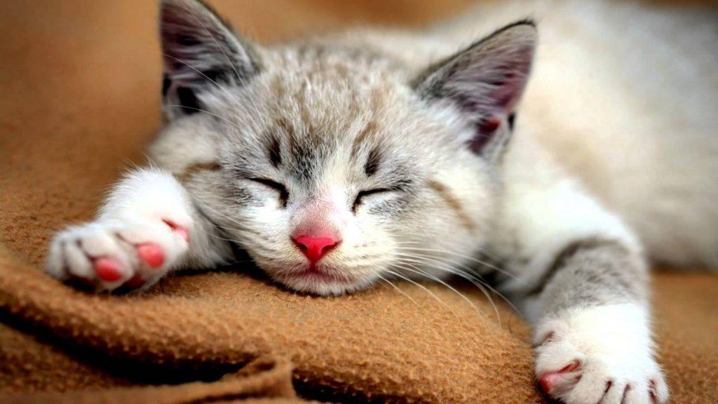 cat stress symptoms